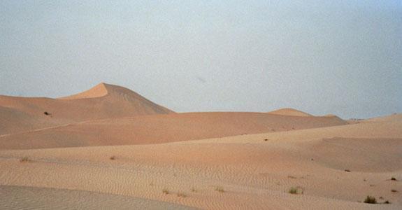 Availability – Desert Survival